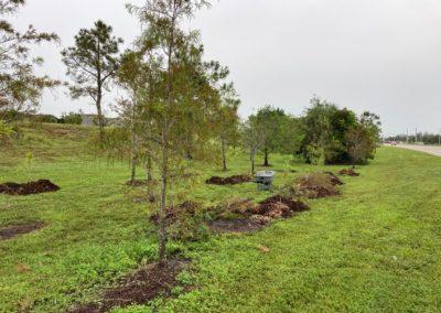 Plant Trees Volunteering in Cape Coral FL
