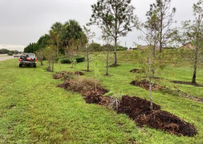 Plant Trees Volunteering in Cape Coral FL