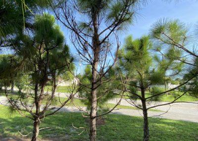 2020 Tree Survey